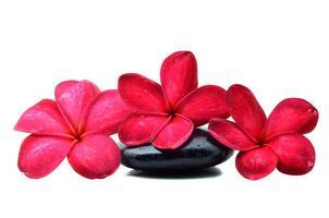 zenstenar med frangipani blomma foto