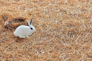 kanin sitter på höstackar eller torrt gräs foto