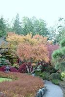 höstfärger i en japansk gardin foto