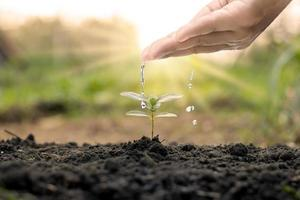 vattna växterna för hand, inklusive träd som växer naturligt på jord av god kvalitet, begrepp om trädplantering, kvalitet och hållbar skogsrestaurering. foto