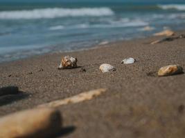 vackra snäckskal och havstenar i sanden vid havskusten foto