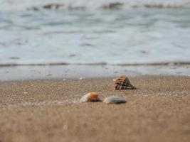 snäckskal i sanden vid havskusten eller havet. havsskum foto