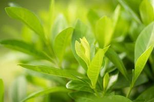 natur grönt träd färskt blad på vackra suddiga foto