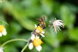 bi och gräsblomma foto