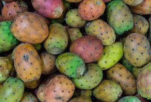 opuntia tunos kaktusen fig foto