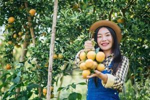 kvinna som skördar en apelsinplantage foto