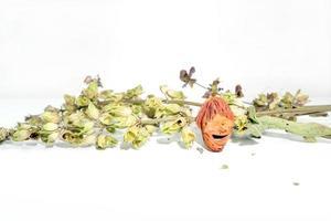 persika grop med torra salvia kvistar foto
