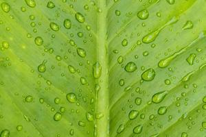 vackra gröna blad med droppar vatten foto