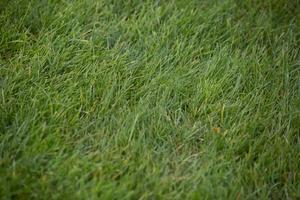 bakgrund av grönt gräs foto