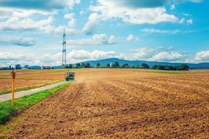 jordbruksväxt spikfält i naturen foto