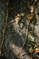 naturlig trädbarkstam foto