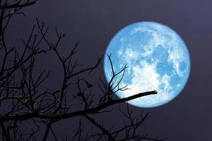 superblå måne och silhuett av grenträd på natthimlen foto