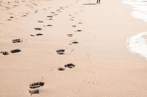 fotspår i våt sand på marginalen vid Indiska oceanen foto