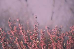 rosa bakgrund bestående av blommor foto