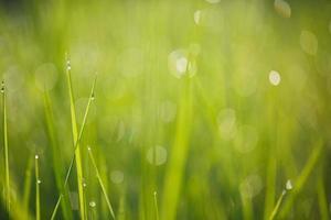 dagg på gräs grönska bakgrund foto