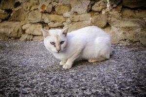 övergiven vilse vit katt foto