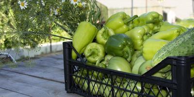 grönsaker i korgen foto