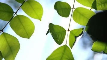 närbild vacker utsikt över naturen gröna blad på suddig grönska foto