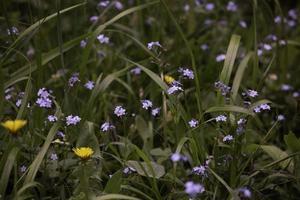 liten lila blomma i skogen foto