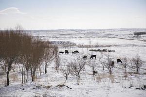 vackert vinterlandskap i staden vanadzor. foto