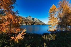 höstfärger i schweiziska engadindalen foto