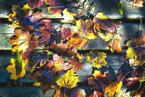 stora höstfärgade blad badade i regn foto