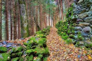kulle spår i en skog av höstlöv foto