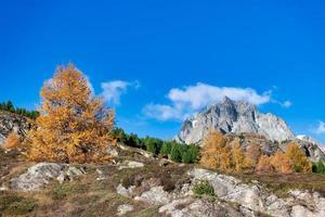 stenigt berg i höstlandskap med en guldfärgad lärk foto