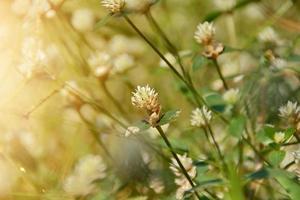vacker naturbakgrund med morgonfärskt gräs och nyckelpiga. foto