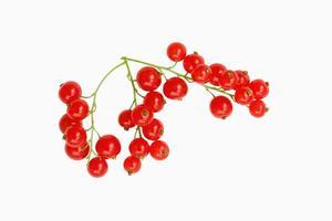 röda vinbärsfrukter isolerade på vit bakgrund foto