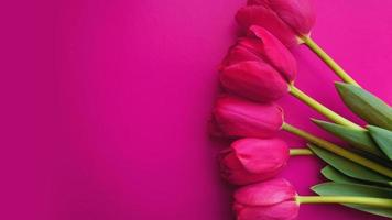 rosa tulpaner på rosa bakgrund. textutrymme bild foto
