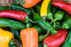 pimentos de padron spansk peppar foto