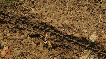 cykeldäckspår kvar i färsk lera foto