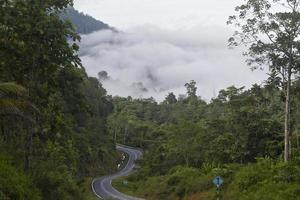 väg och djungel foto