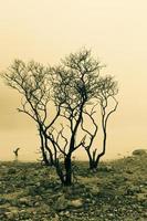 träd och dimmig yta foto