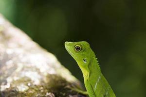 grön ödla på nära håll foto