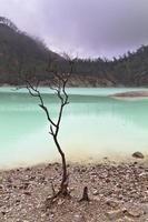 dött träd och vulkanisk krater foto