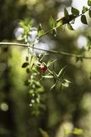 närbild frukt skogen foto