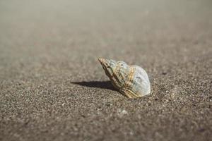 havsskal på sandstrand foto