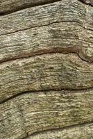 textur av trä foto