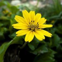 gul blomma med suddig bakgrund foto