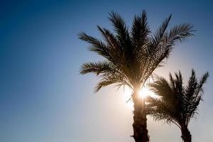 silhuetter av palmer mot himlen under en tropisk solnedgång foto
