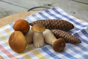 ett gäng porcini -svamp och grankottar. porcini svamp foto