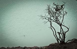träd vid vulkanisk kratersjö foto