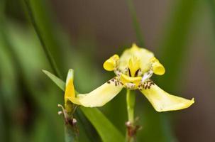gul orkidéblomma foto