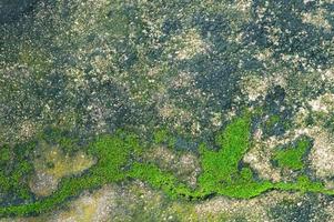 moss växer på cementgolvet. foto