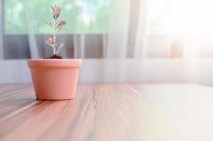 plantkrukor planterade i rummet foto