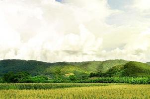 landskap av majsfält med solnedgången, gård av grönt grödfält. foto