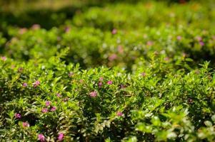 vackra blommor textur natur bakgrund foto
