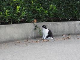 två tabby katter, en orange och en svart och vit foto